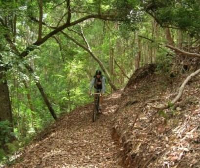 Makawao Forest Reserve Trails Amp Bike Rental