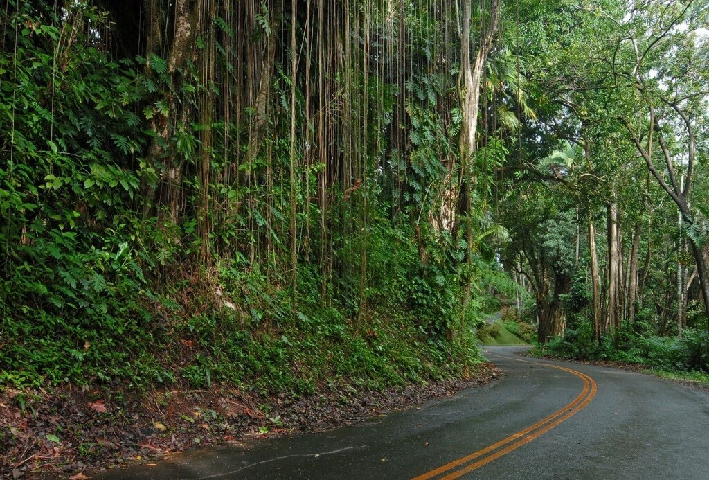Maui-Road-Bike-Rental