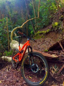 makawao-forest-trails-700x933-225x300_f_improf_225x300