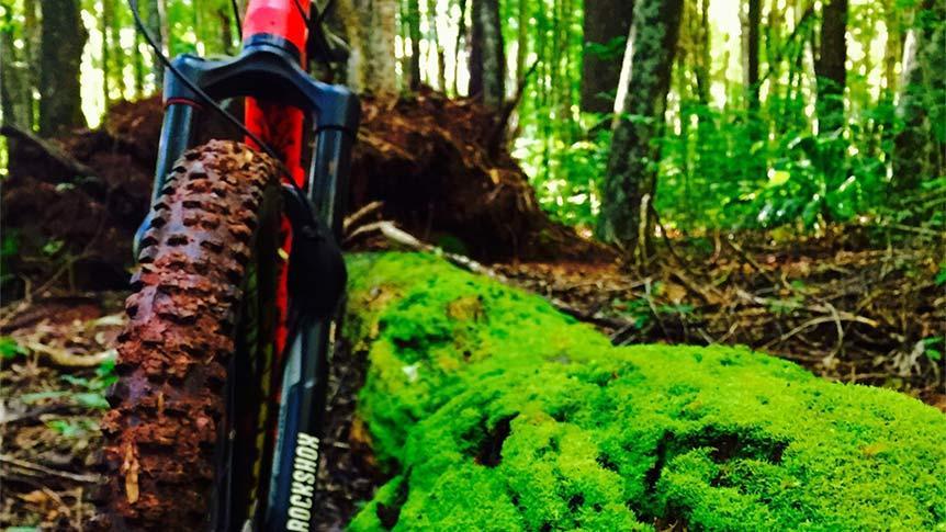 makawao-forest-trails-862x485